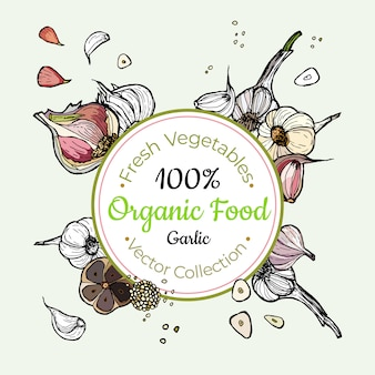 Garlic vegetable groceries vintage vector sticker, poster, label template. hipster fresh food line hand drawn illustration