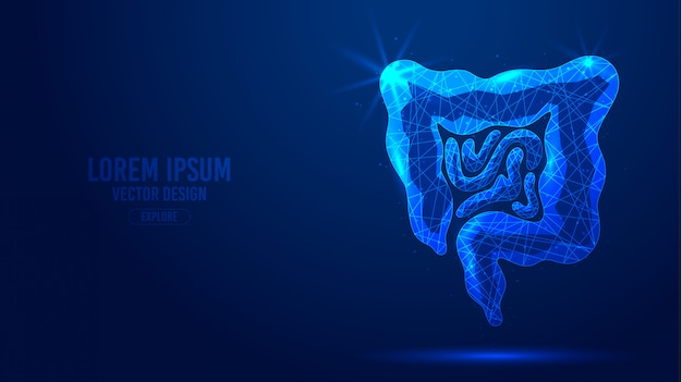 Gastrointestinal tract geometric lines, low poly style wireframe  banner template.