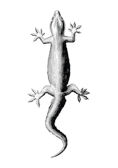 Gecko hand drawing vintage style