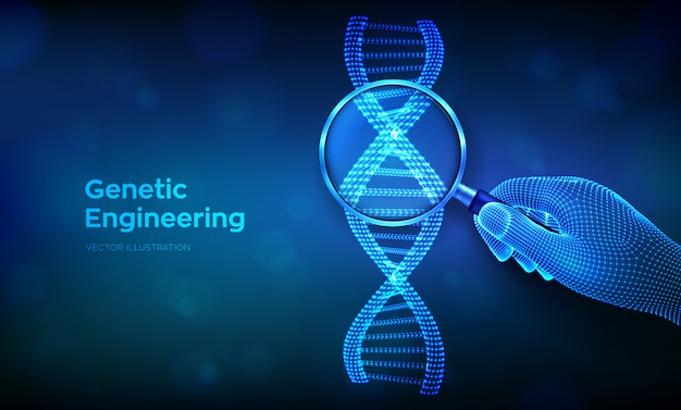 Genetic engineering concept with magnifier in hand and dna code sequence. wireframe dna molecules structure mesh.