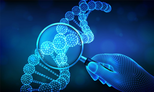 Genetic engineering concept with magnifier in hand and dna sequence. wireframe dna code molecules structure mesh.