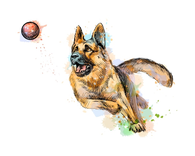 German shepherd dog playing and catching a ball from a splash of watercolor, hand drawn sketch. vector illustration of paints