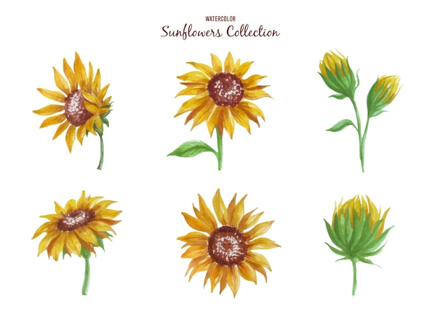 Get this new collection of gorgeous sunflower watercolor artworks in their charming bright yellow.
