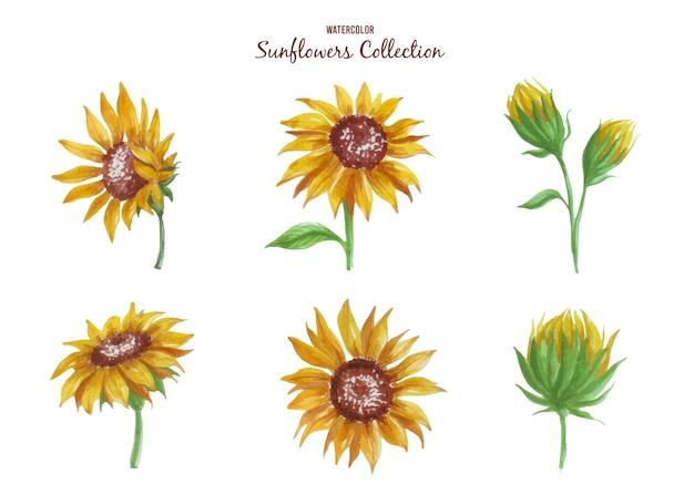 魅力的な明るい黄色のゴージャスなヒマワリ水彩アートワークのこの新しいコレクションを入手してください。