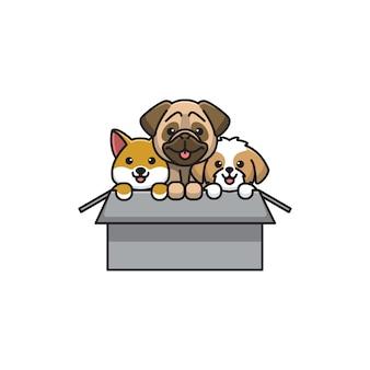 Gift dog cute