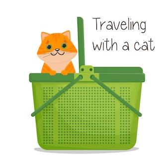 Рыжий кот выглядывает из переноски. пластиковая сумка для переноски животных
