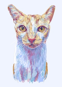 Ginger cat, portrait of cute kitten, hand drawing illustration