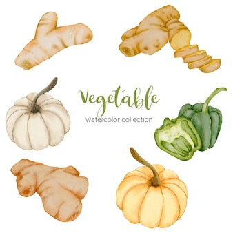 Ginger, galangal, pumpkin, bell pepper in watercolor collection