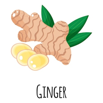 Ginger superfood root for template farmer market design, label and packing. natural energy protein organic food.