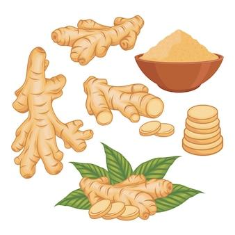 Ginger vector set illustration