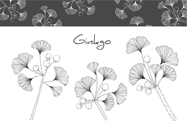 Ginkgo leaf and flower drawings