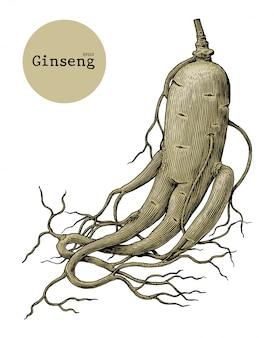 高麗人参の手描きのヴィンテージの彫刻イラスト、薬用植物