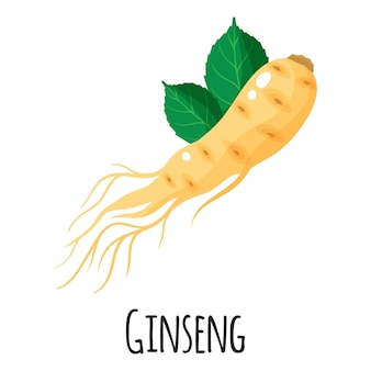 Ginseng superfood root for template farmer market design, label and packing. natural energy protein organic food. vector cartoon isolated illustration.