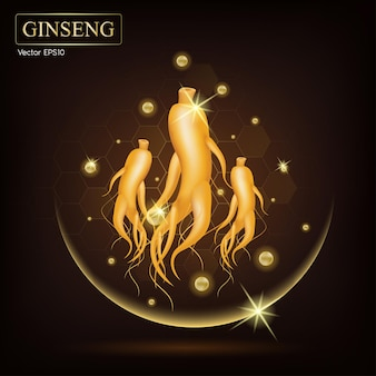 Ginseng traditional chinese herbs, that using for medicine and food famous in asian.