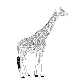 Giraffe coloring page vector