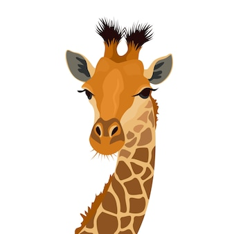 Giraffe head isolated on white. african animal mammal portrait.  illustration