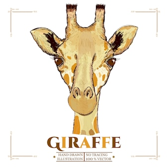 Giraffe portrait hand drawn vectorized illustration
