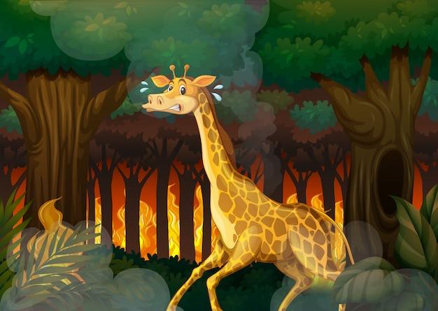 A giraffe running away from wildfire forest