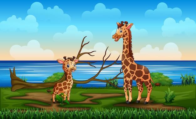 A giraffe with her cub enjoy in a riverbank