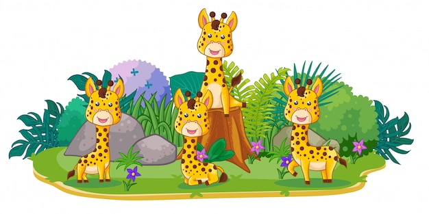 Giraffes are playing together in the garden
