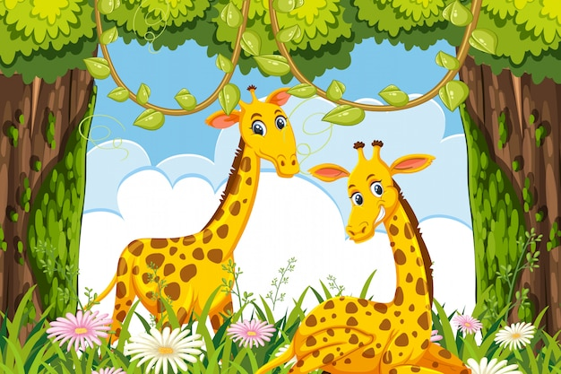 Giraffes in woods scene