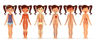 Girl body anatomy. Cartoon medical female human body structure of muscular