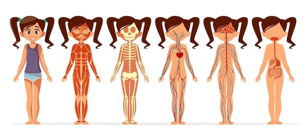 Анатомия тела девочки. мультфильм медицинской женской структуры человеческого тела мышечной