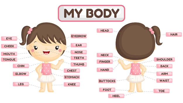 Имя частей тела девушки