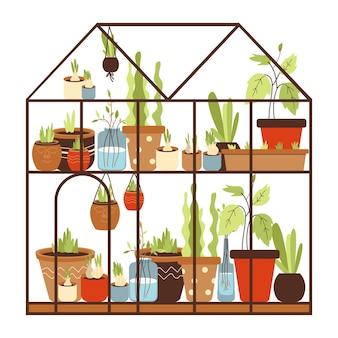 Glass greenhouse with collection of green house plants growing in pots on shelves. home urban gardening. winter garden. flat cartoon vector illustration isolated on white