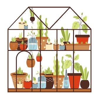 선반 위의 화분에서 자라는 온실 식물 컬렉션이 있는 유리 온실. 가정 도시 원예. 겨울 정원입니다. 흰색 절연 플랫 만화 벡터 일러스트 레이 션