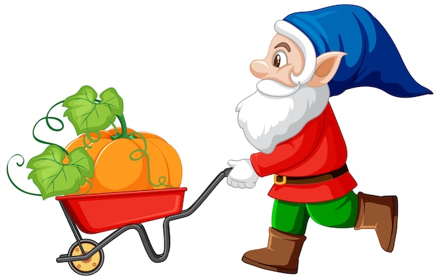 Gnome havest pumpkin with wheelbarrow cart cartoon character on white background