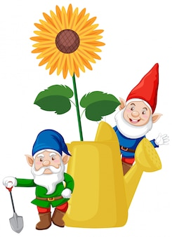 Gnomes with sunflower in watering can cartoon style on white background