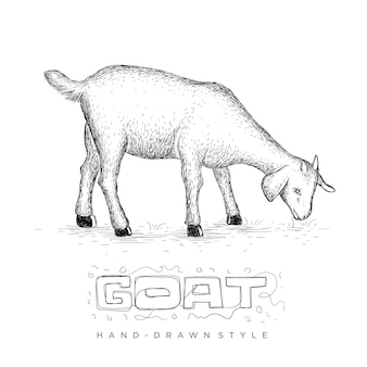 Goat eating grass in a field, hand drawn animal illustration