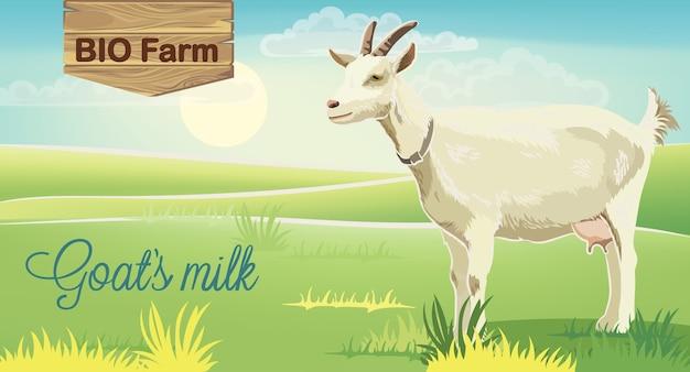 背景に日の出と牧草地のヤギ。バイオファームミルク。リアル。