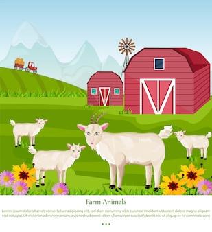 농장에서 염소