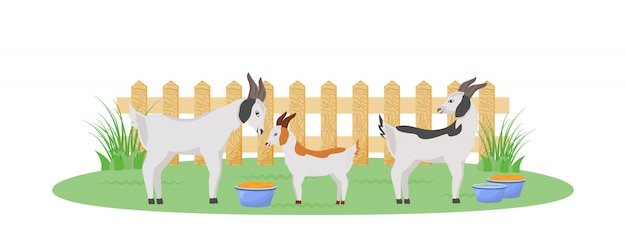 Goats in garden flat color character