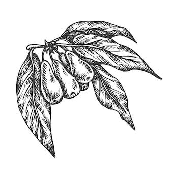 구기 열매 손으로 그린 그림.