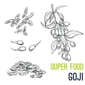 Goji, super food hand drawn