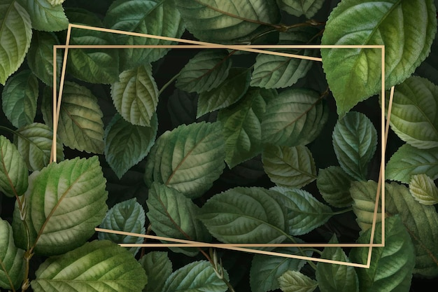 Gold frame on foliage background