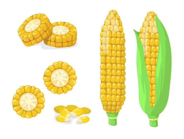 Gold or golden maize harvest flat item set. cartoon corn cob or seeds, grains for popcorn isolated vector illustration collection. healthy food and vegetables concept