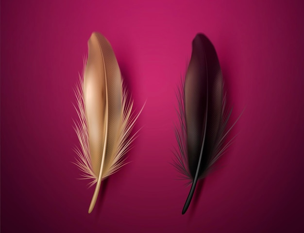 Golden and black feathers on burgundy purple background in 3d illustration