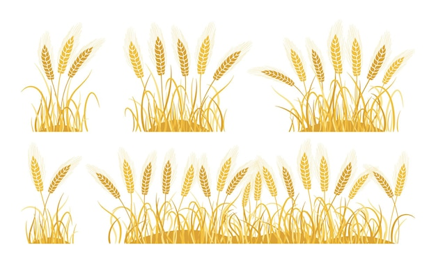 Golden field ears wheat cartoon set ripe spikelets wheat collection agricultural oat bakery flour production