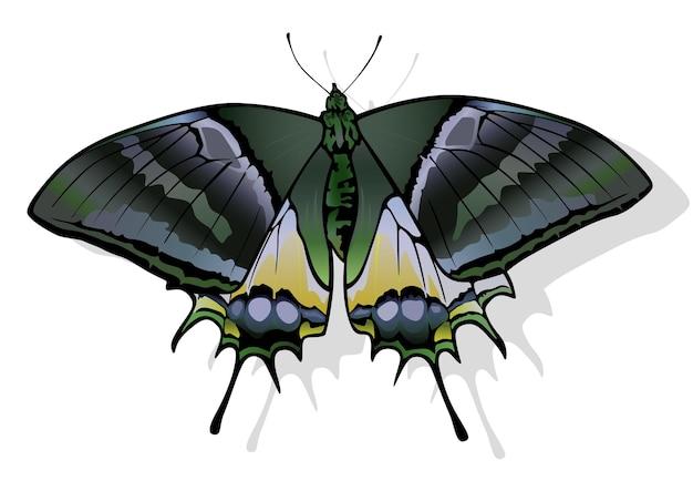 Golden kaiserihind бабочка teinopalpus aureus