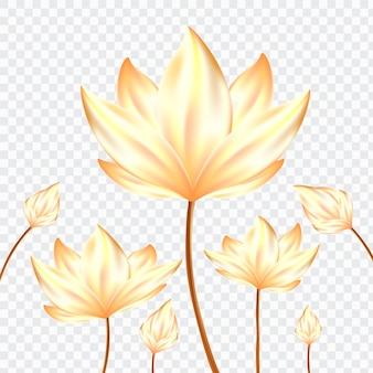 Golden realistic lotus flowers on isolate background