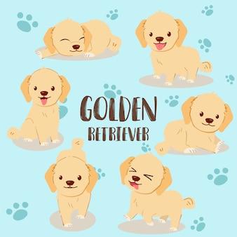 Golden retriever pack set