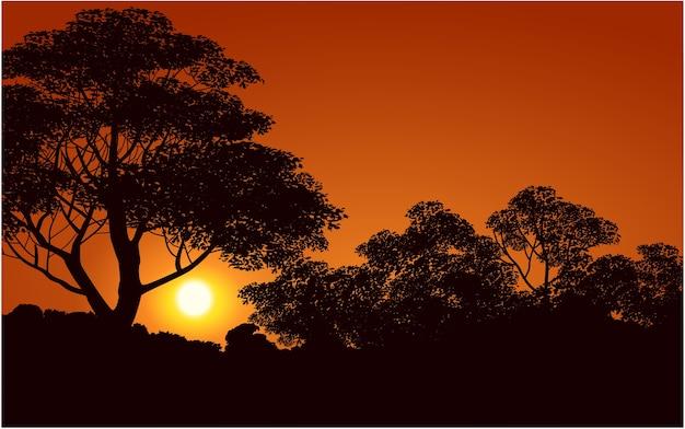 森の黄金の夕日
