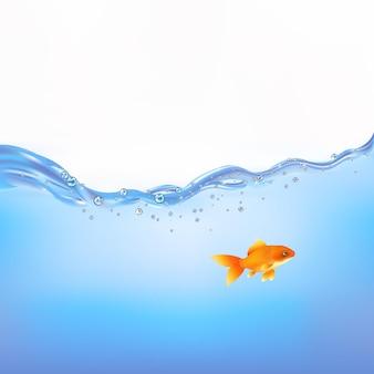 Золотая рыбка плавает в воде,