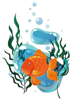 Goldfish swimming under the water