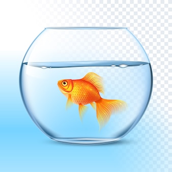 Goldfish in water bowl realistic image