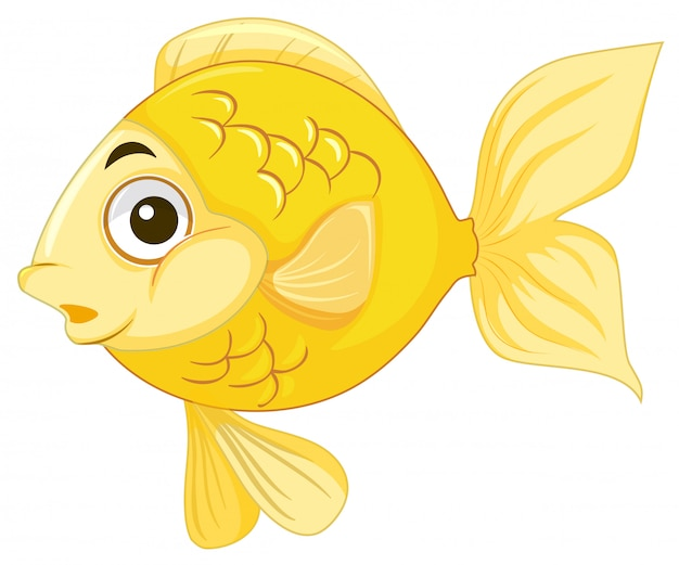 A goldfish on white background